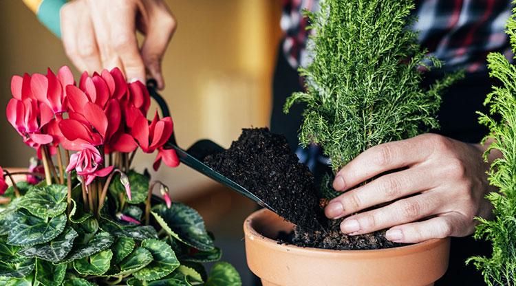 نگهداری از انواع گل ها