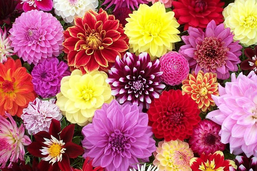 نماد و پیام گل ها