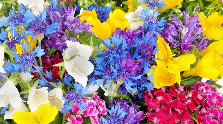 پیام گل ها